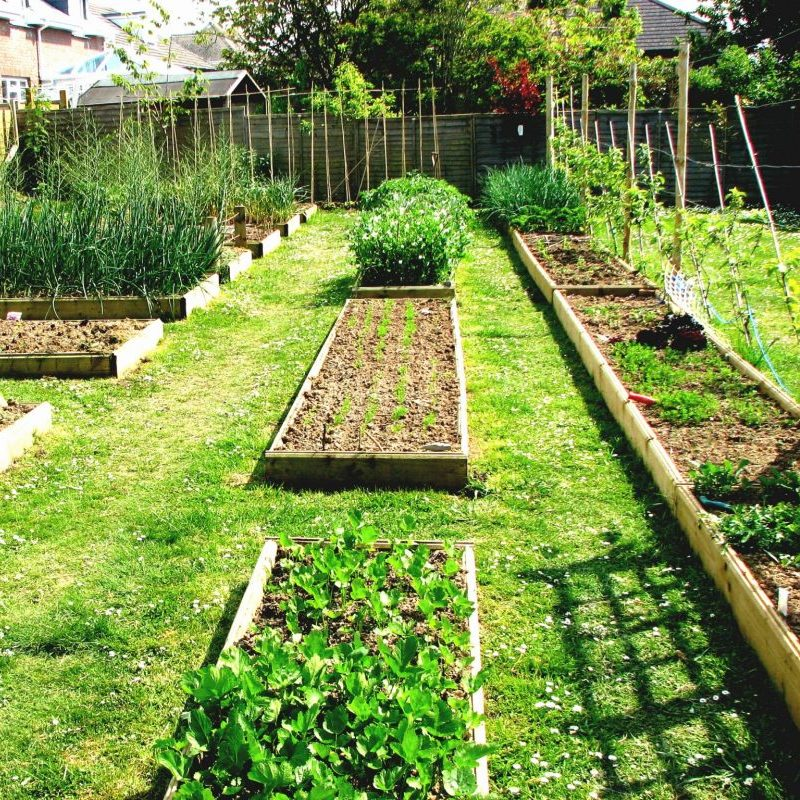 How to Start Vegetable Garden: The Perfect Spot