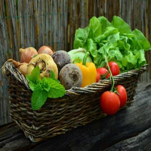 how to start vegetable garden