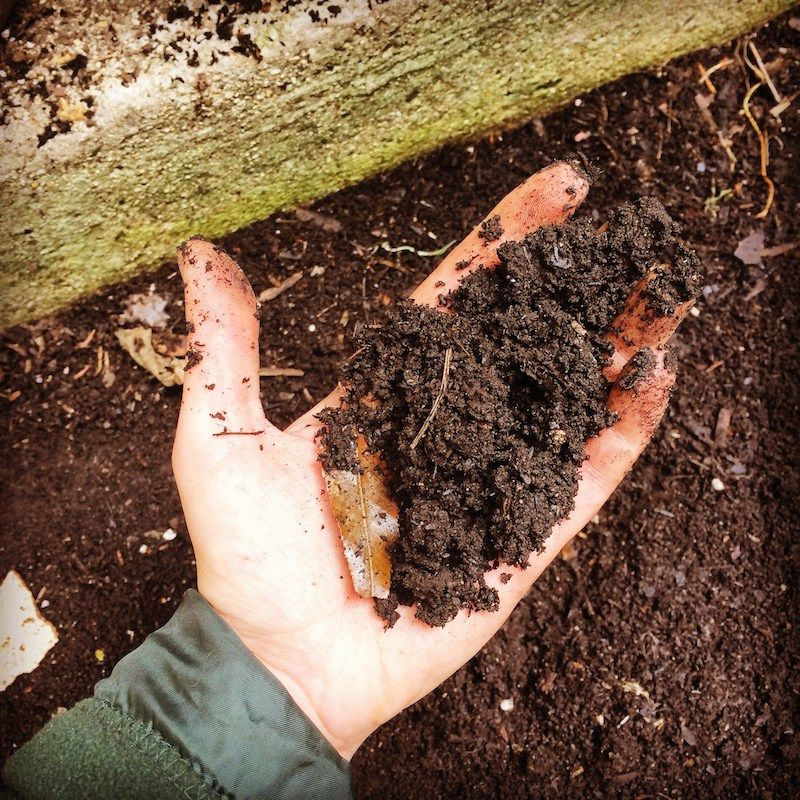 how to start vegetable garden Test and Fix The Soil
