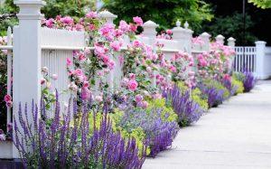 Splendid Living Fences